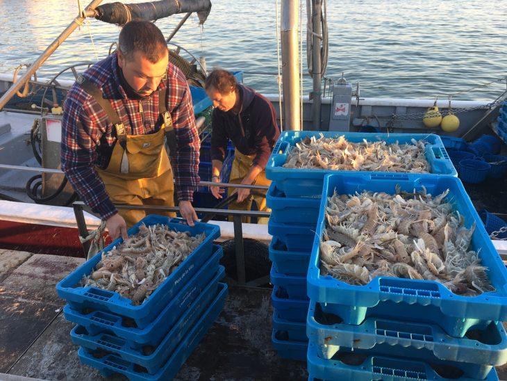 Descarga del pescado en el Puerto de Sant Carles de la Rápita