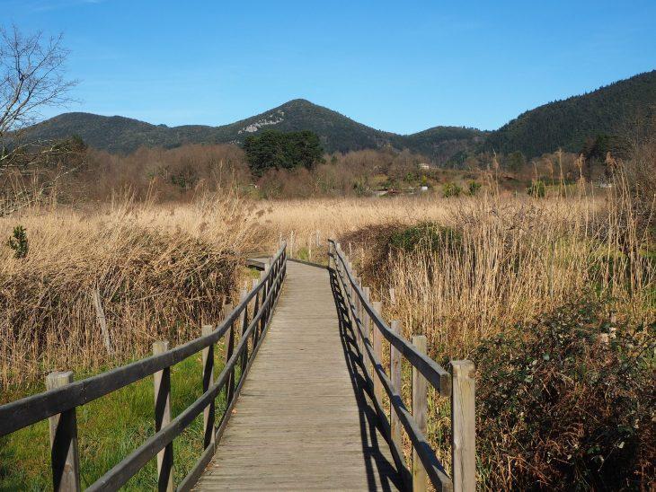 Ruta por las pasarelas de las marismas de Urdaibai