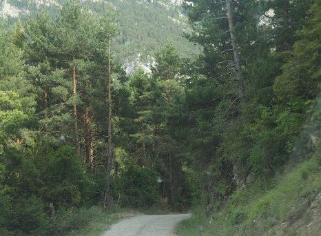 Pista forestal de Saravillo