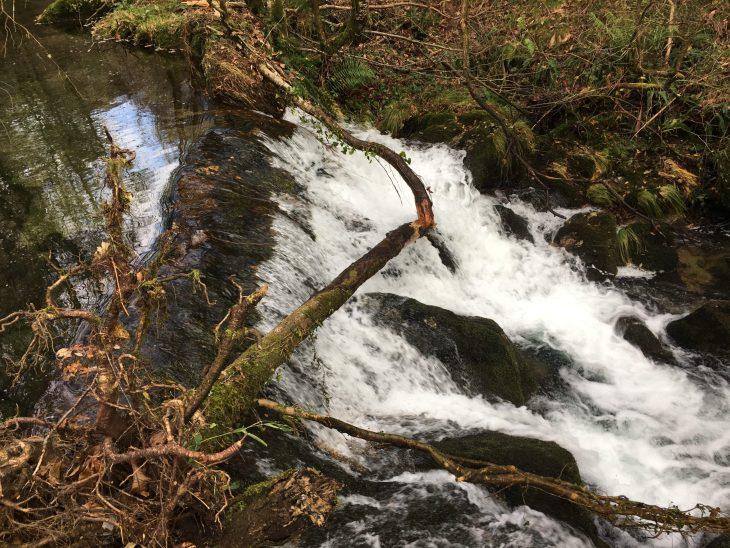 Presa en el río Sesín