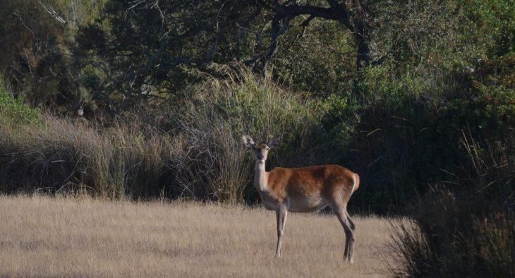 Avistamiento de fauna en el Parque Nacional de Doñana