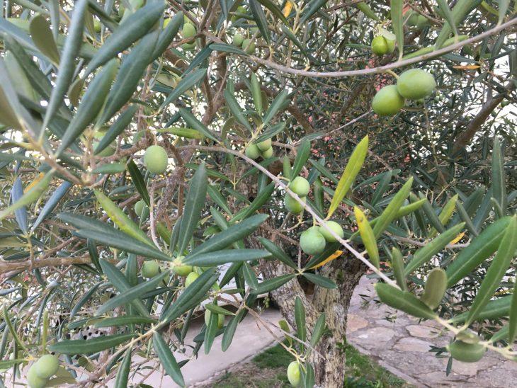 Almazara Aceiteros del Águeda