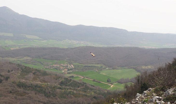 Buitres en el monte Soila