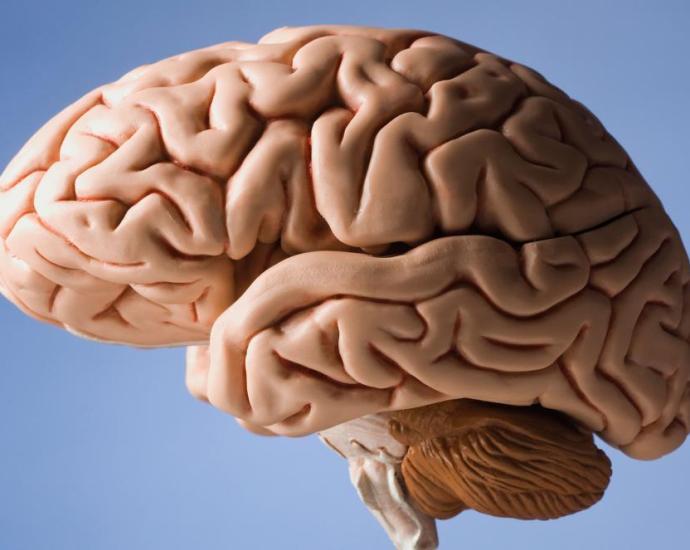 Beyin ve Zeka
