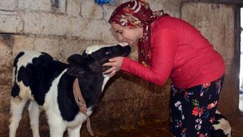 Abbaslar Köyünde Bakanlık projesi ile aldığı ineklerle ev ekonomisine katkı sağlıyor