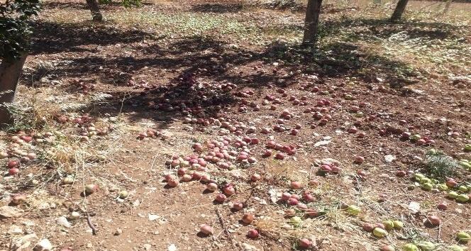 Fırtına meyve ağaçlarına zarar verdi