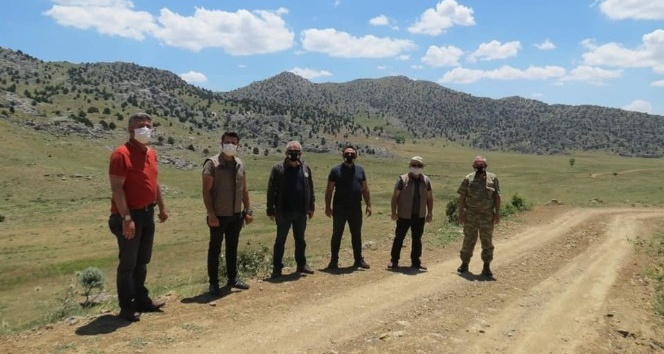 Anadolu'nun 'cerenleri' 180 yıl önce yaşadıkları Nurhak'a geri dönüyor