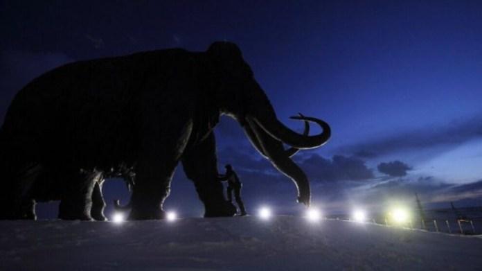 Bilinen en eski DNA Sibirya mamutlarına ait çıktı