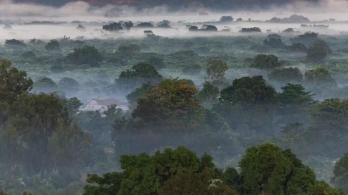 Dünyadaki ağaçların üçte biri yok olma tehlikesi ile karşı karşıya