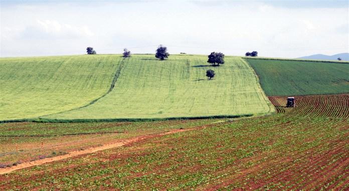 Bilirkişiler: Ayaş'ta tarım alanının yapılaşmaya açılması kamu yararına aykırıdır