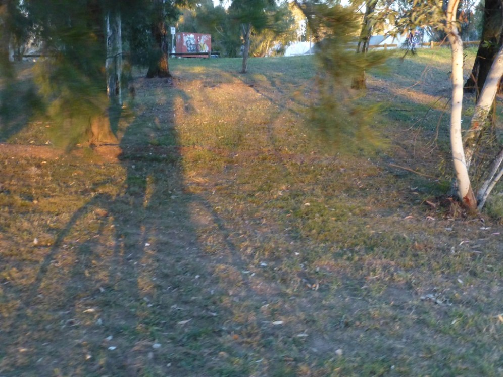 My shadow in the evening sun