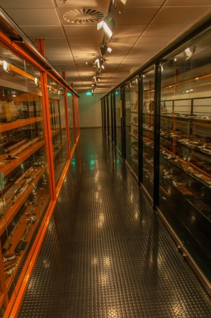 Inside the Open Collections room.