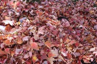 Leaves cover Mom