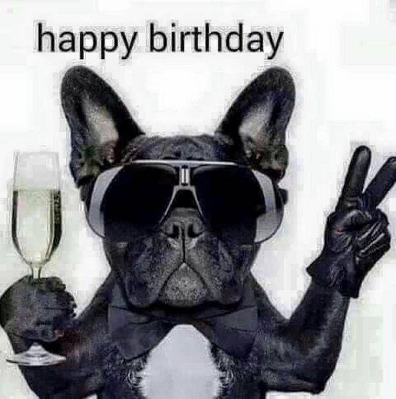Happy Birthday Gif 101 Funny Happy Birthday Dog Memes For Paw Lovers Everywhere Yesbirthday Home Of Birthday Wishes Inspiration