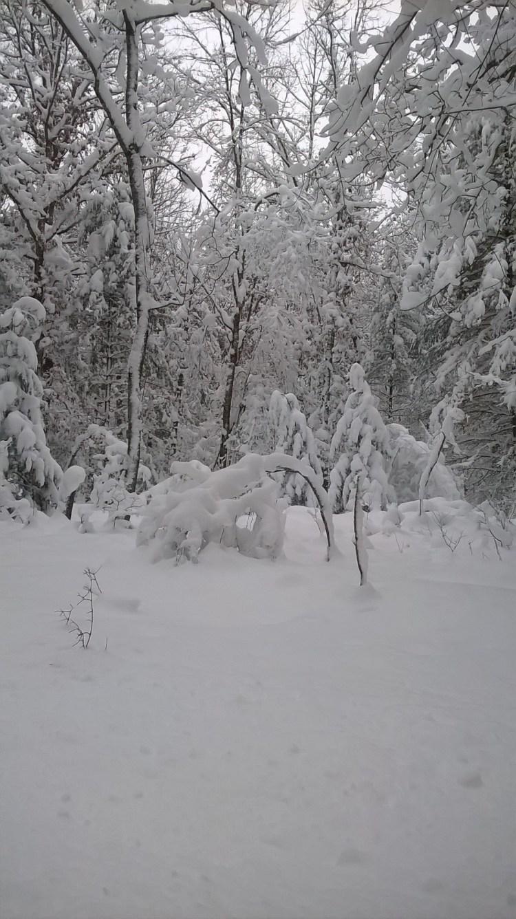 Michigan scene in the wintertime