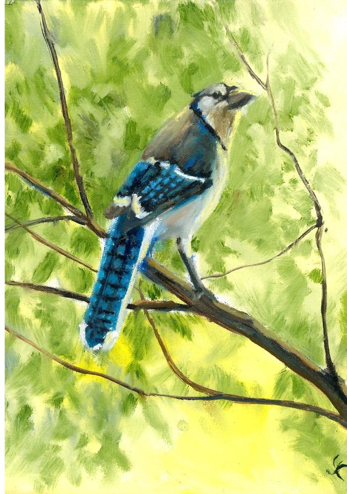 Blue Jay small
