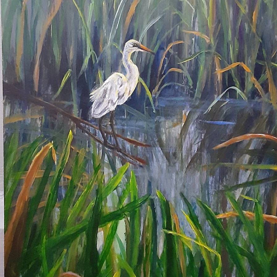 white egret in Michigan marsh