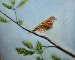 Wood thrush oil painting by Yeshuas Child Art