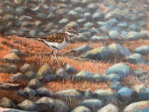 acrylic painting of a Kildeer on a rocky beach near Lake Huron in Michigan
