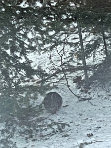 small rabbit under the trees in the snow