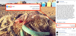 Dead Dogfish caught in a net on Brighton beach with beach huts in the background