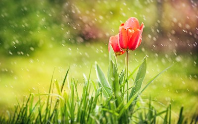 Rain Wallpapers High Quality | Download Free