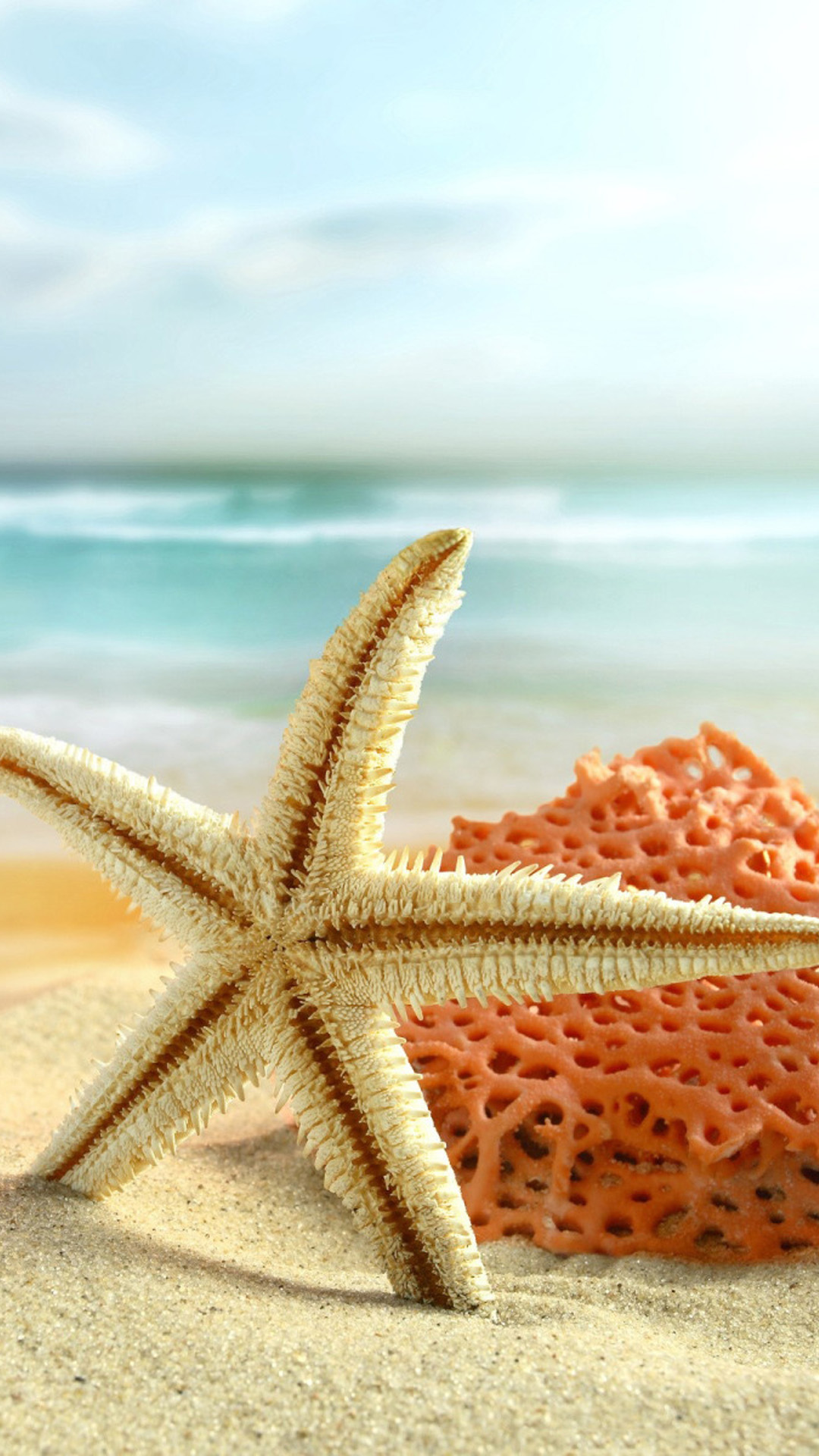Starfish Wallpapers High Quality Download Free