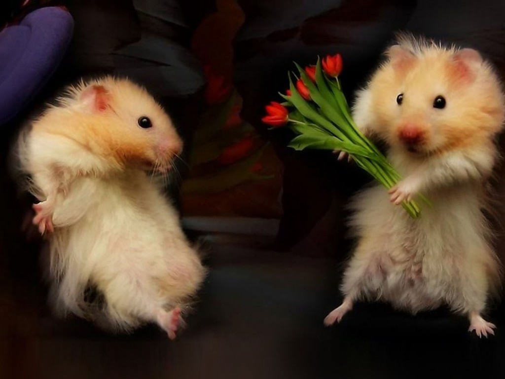 Animals And Flowers Wallpapers High Quality Download Free