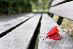 red-leaf-bench