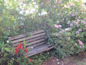 toowoomba-flowers-057