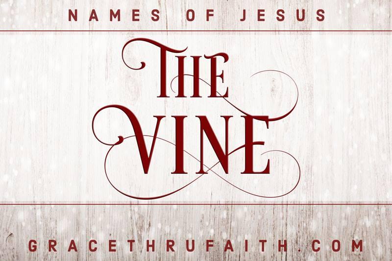 Names of Jesus: The Vine