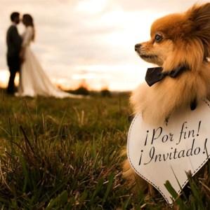 Perro-Invitado-Boda