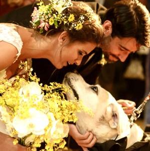 Perro-boda-altar-Iglesia