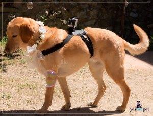 Tu perro graba tu boda
