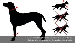 Tabla de medida del cuello de perros