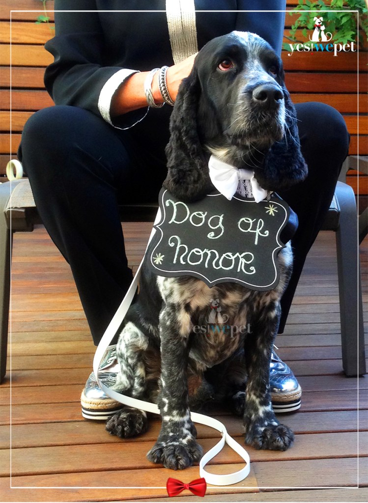 perro cocker en boda gay opinión yes we pet