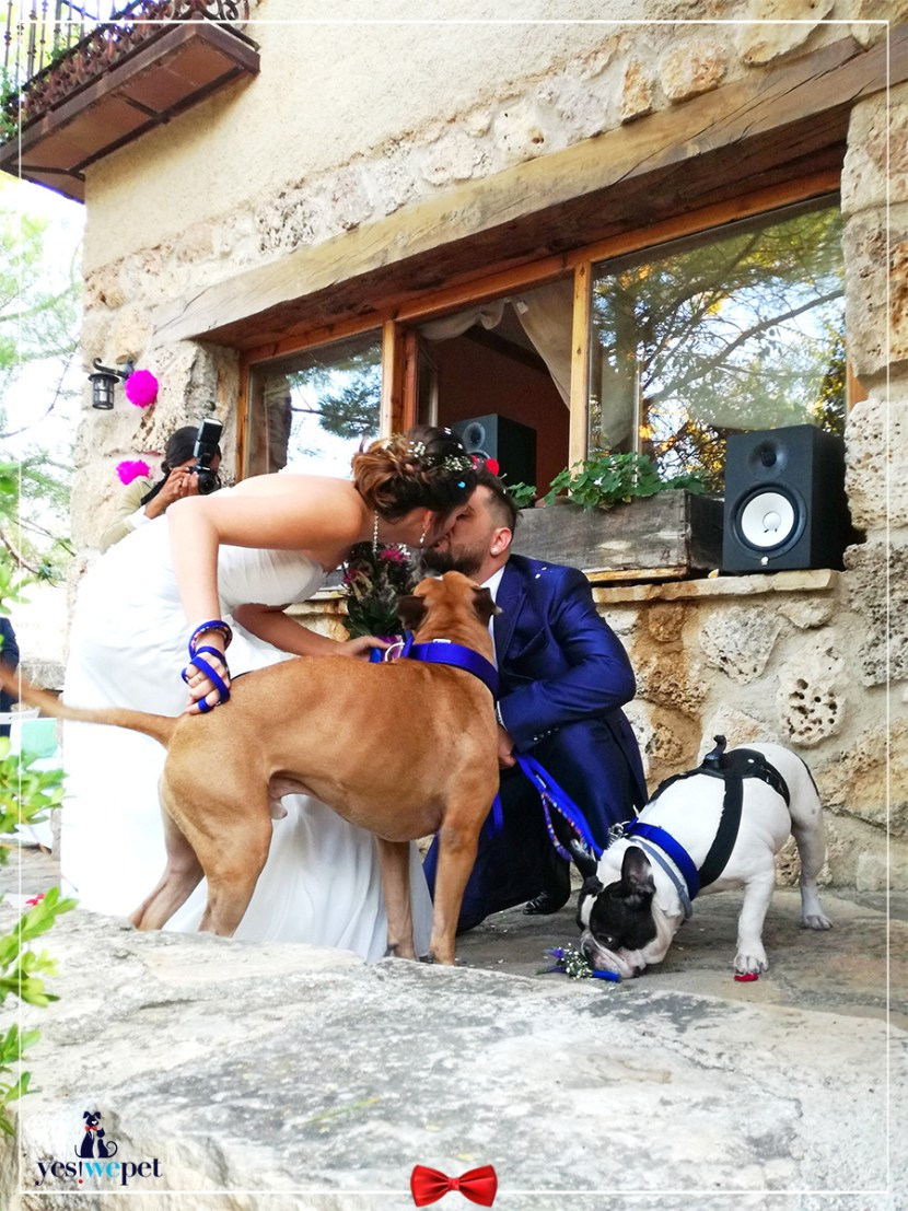 Perro en boda de yesi opinión yes we pet
