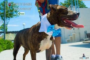 Pajaritas para perros-adoptados-abrazo-animal
