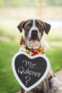 Perro en adopción con corona de flores