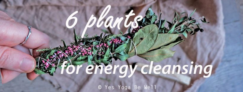 Plants for energy cleansing