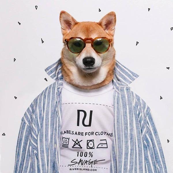 chú chó làm mẫu ảnh  nổi tiếng