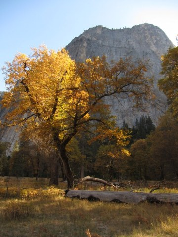 BlackOak_Cathedral_Yosemite_DeGrazio