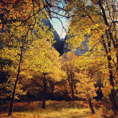 Black_Oaks_Yosemite_DeGrazio