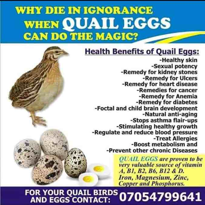 functions of quail eggs