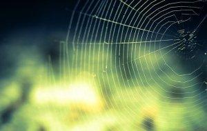 En spindel i nätet