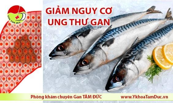 cá mòi cá thu cá trích giảm nguy cơ mắc ung thư gan