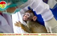 Thái Lan thử thành công vaccine ngừa COVID-19 trên khỉ và chuột