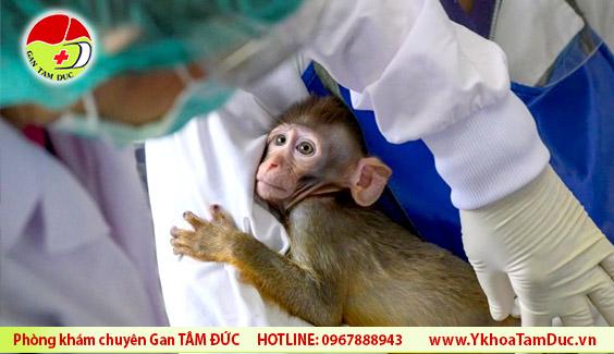 thai lan thu nghiem thanh cong vaccine covid-19 tren khi va chuot GTD Thái Lan thử thành công vaccine ngừa COVID-19 trên khỉ và chuột thai lan thu nghiem thanh cong vaccine covid 19 tren khi va chuot GTD