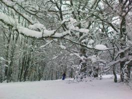 Выпавший снег наконец-то закрыл траву и ветки