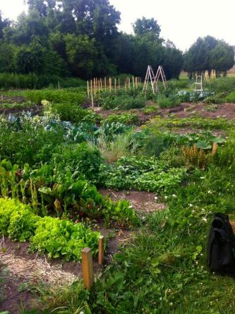 Ptbo community garden Liftlock